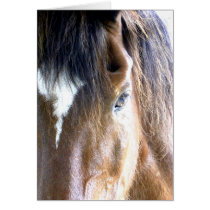The Soul l Horse Face Close-Up Photography Card