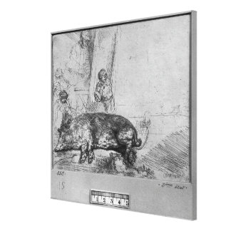 The Sow, 1643 Stretched Canvas Print