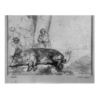 The Sow, 1643 Postcard