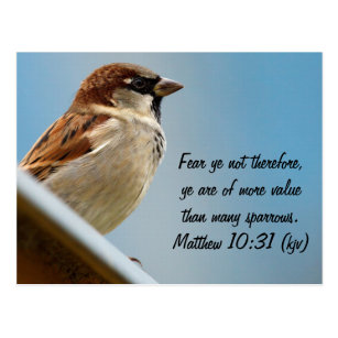 Bible Verse Sparrows Gifts On Zazzle