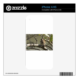 The Sparrow Skins For iPhone 4S