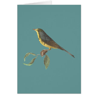 The Spotted Canada Warbler(Sylvicola pardalina) Greeting Card