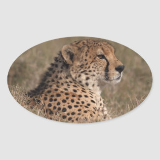 The Spotted Sphinx Oval Sticker