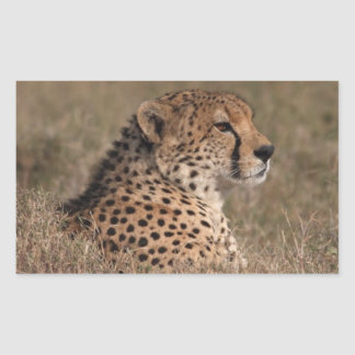 The Spotted Sphinx Rectangular Sticker