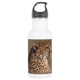 The Spotted Sphinx Water Bottle