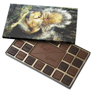 The Squirrel box of chocolates
