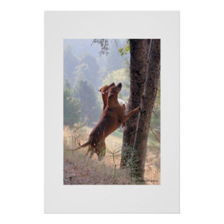 The Squirrel Hunt Poster