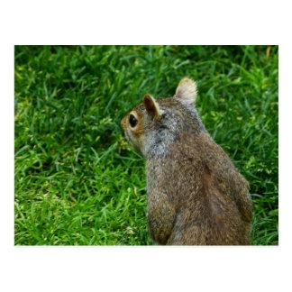 The Squirrel in Boston Common Postcard