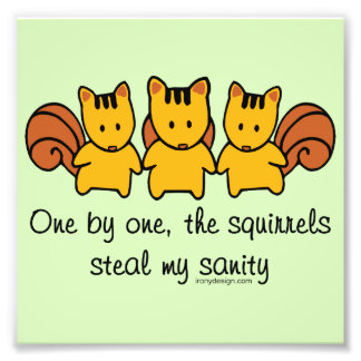 The squirrels steal my sanity photo print