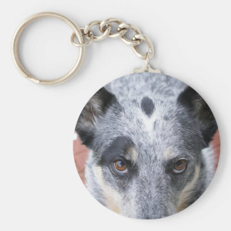 The Stare Down - a cowdog look Keychain