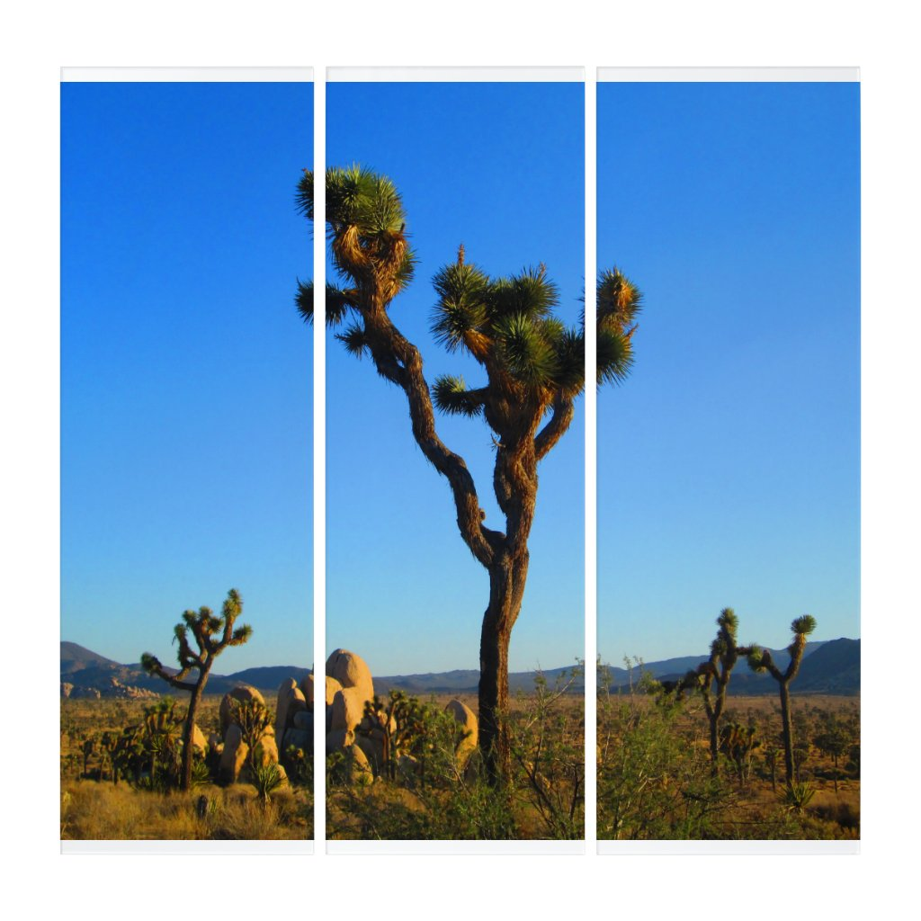 The Stately Joshua Tree Triptych