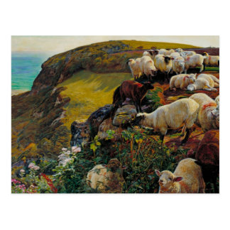 The Strayed Sheep Postcard