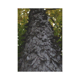 The Strength of Trees Canvas Print