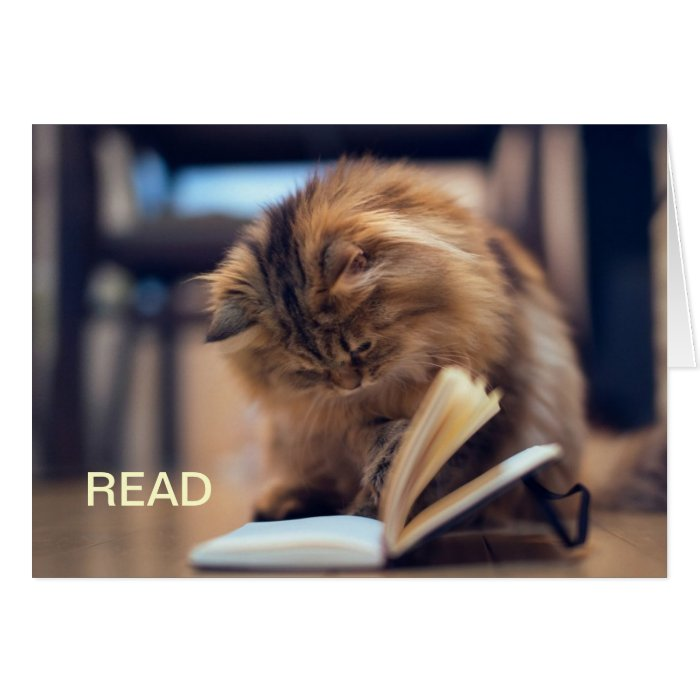 The Studious Cat Note Card | Zazzle