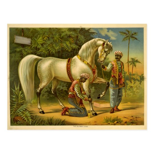 The Sultan's steed 2012 calendar Postcard