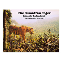 The Sumatran Tiger is nearly extinct and needs our Postcard