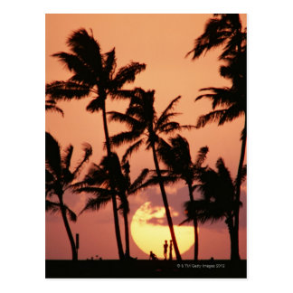 The Sun and Palm Tree Postcard