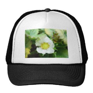 The Sun in a Flower Trucker Hat