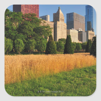 The sun, refelcts off prairie like grass in square sticker