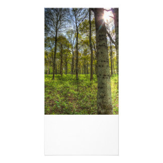 The Sun Touched Forest Card