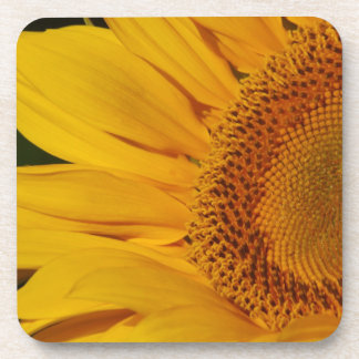 The Sunflower and its meaning Drink Coaster