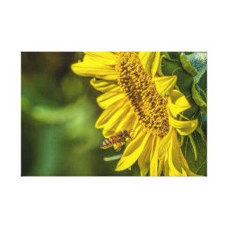 The Sunflower and the Honeybee Wrapped Canvas