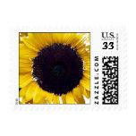 The Sunflower Stamp