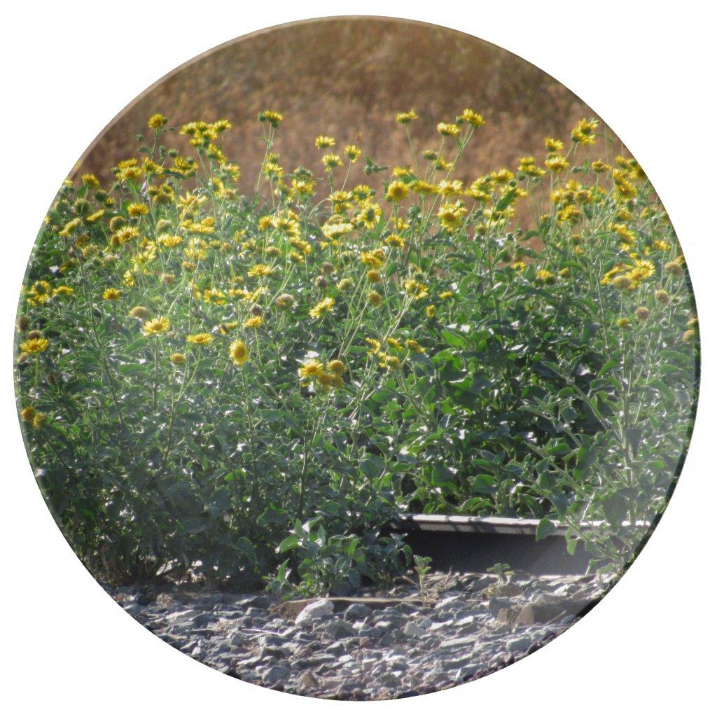 The Sunflowers Near The Train Tracks Plate