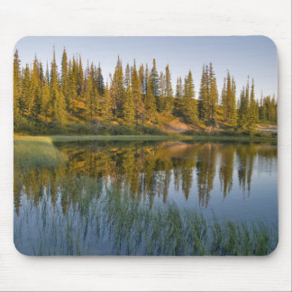 The sunrise illuminates trees on an unnamed mouse pad