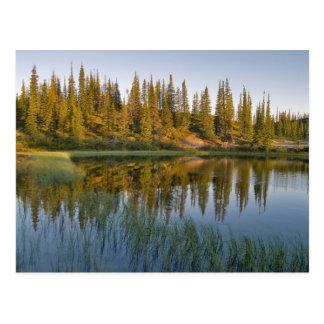 The sunrise illuminates trees on an unnamed postcard