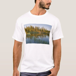 The sunrise illuminates trees on an unnamed T-Shirt