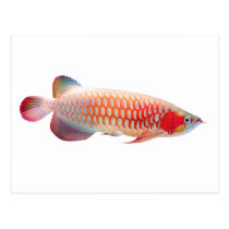 """The superior product 2 """"of Super Red Arowana"""" Postcard"""