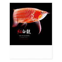 The superior product of Asian Arowana Postcard