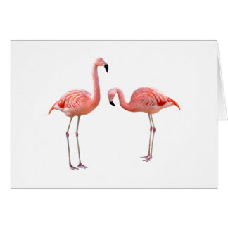"The superior product ""of flamingo"" card"