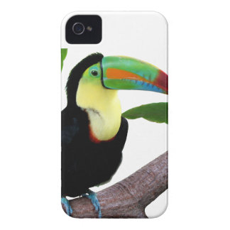 """The superior product """"of Keel-billed Toucan"""" iPhone 4 Cover"""