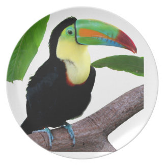 """The superior product """"of Keel-billed Toucan"""" Plate"""