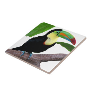 "The superior product ""of Keel-billed Toucan"" Tile"