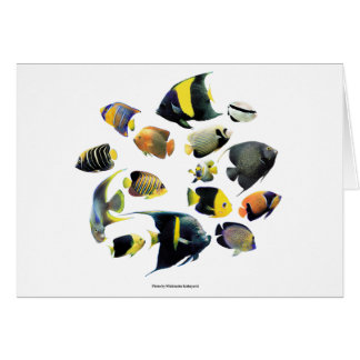 The superior product of Marine angelfish Card