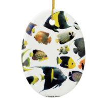 The superior product of Marine angelfish Ceramic Ornament