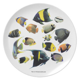 The superior product of Marine angelfish Plate