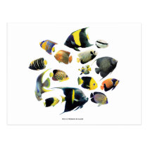 The superior product of Marine angelfish Postcard