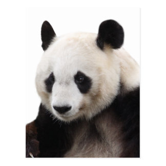 """The superior product """"of Panda"""" Postcard"""