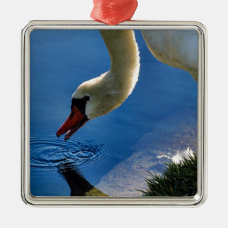 The Swan Takes a Sip Metal Ornament