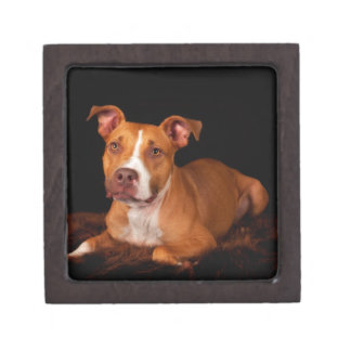 The Sweet Pitty Gift Box