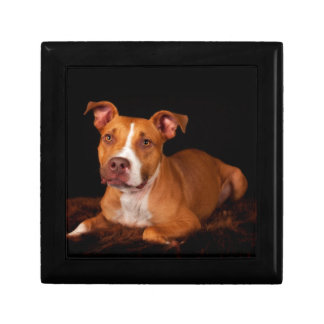 The Sweet Pitty Jewelry Box