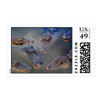 The swimming hole-stamp