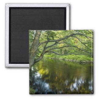 The Taunton River in Bridgewater, 2 Magnet