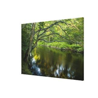 The Taunton River in Bridgewater, Canvas Print