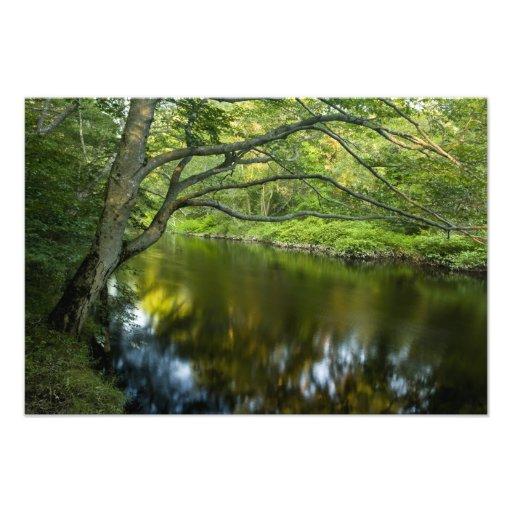 The Taunton River in Bridgewater, Photograph