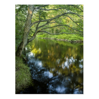 The Taunton River in Bridgewater, Postcard